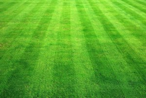Healthy, green lawn because of aeration in Kansas City